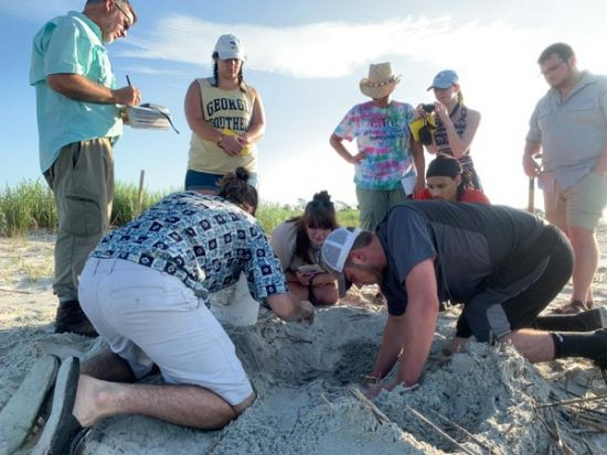 students digging up a sea turtle nest to relocate the eggs
