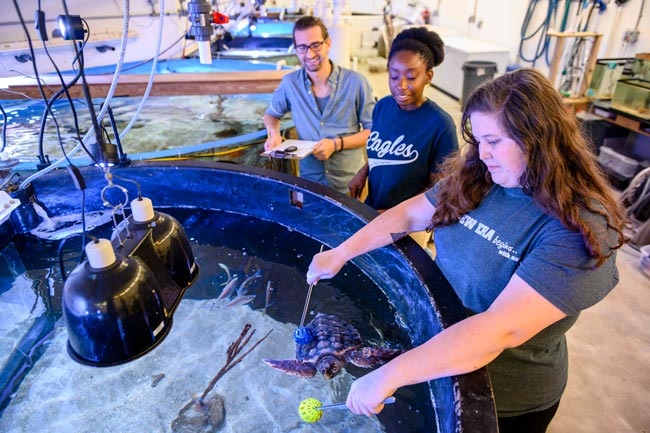 students studying a sea turtle in an aquarium setting