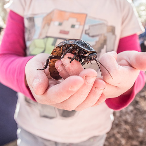 girl holding a giant cockroach up to the camera