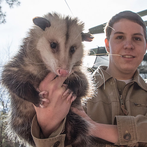 person holding up a possum to the camera