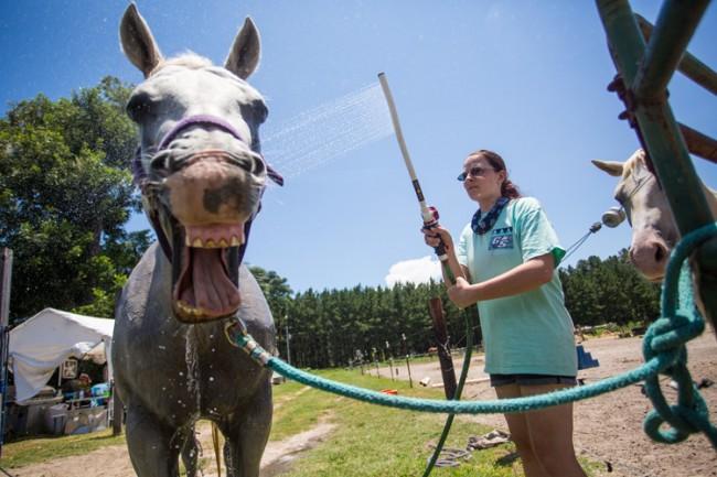 Student Washing Horse