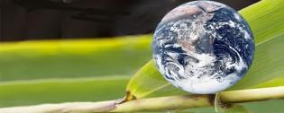 Earth Day Green