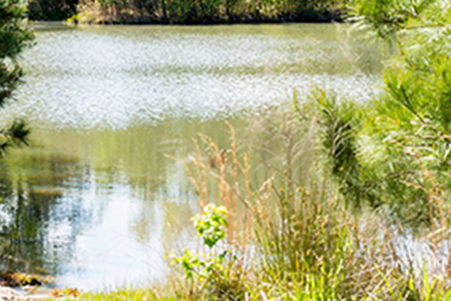 Effingham Wetlands, trees surrounding a large pond
